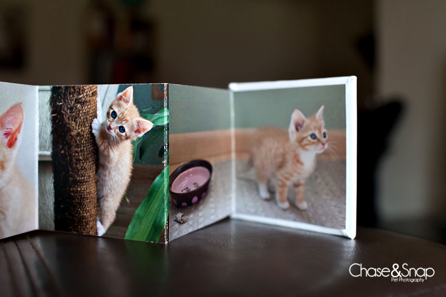 Accordion Book, Products, Toby, Kitten | New Jersey Pet Photographer