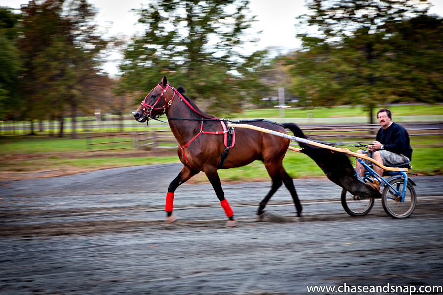 Chariot Horse | New Jersey Pet Photographer