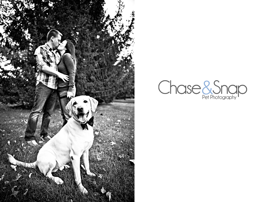 Project 52 | New Jersey Pet Photographer