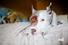 Schnickers | New Jersey Pet Photographer