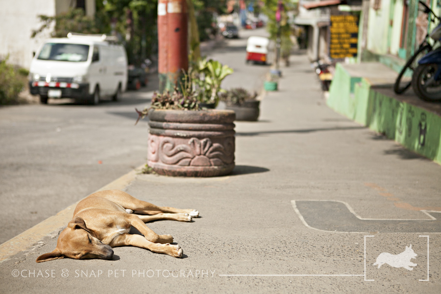 Strays Around the World | Nicaragua | New Jersey Pet Photographer