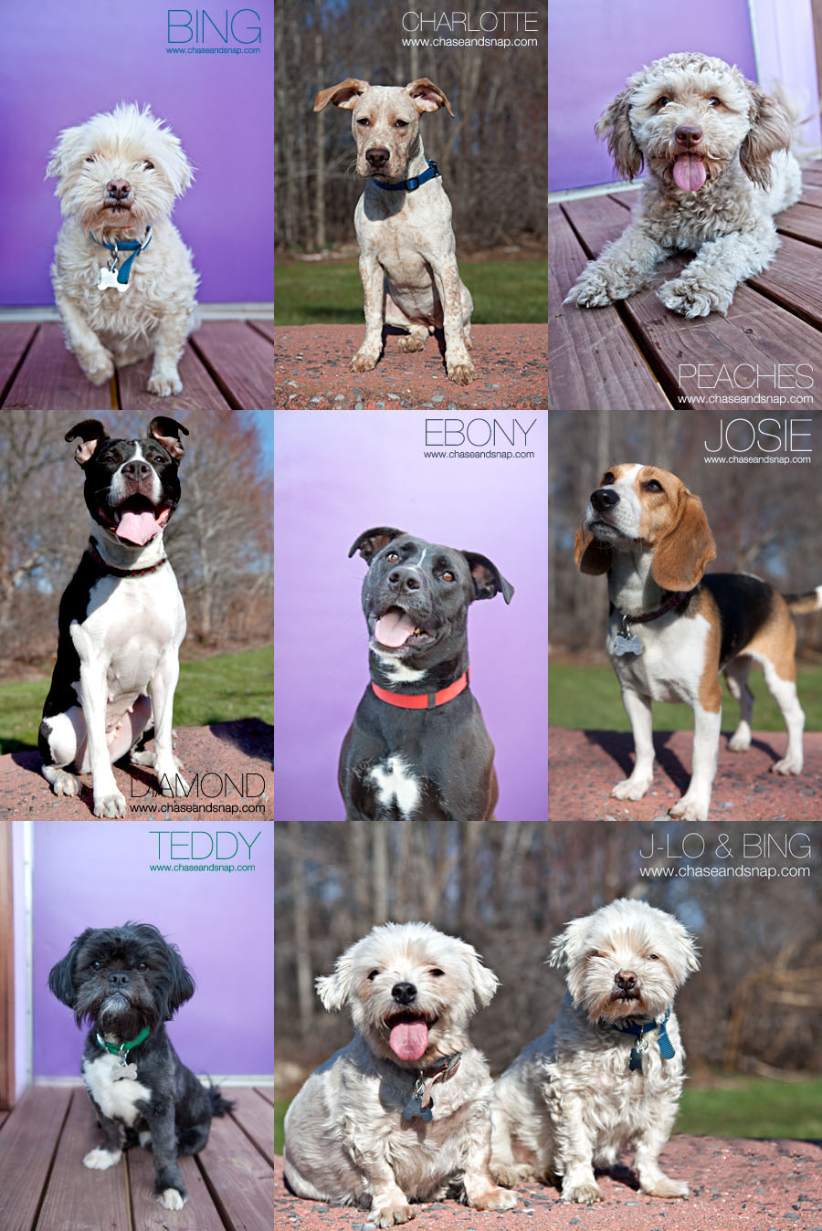 Folas, Adoptable dogs | New Jersey Pet Photographer