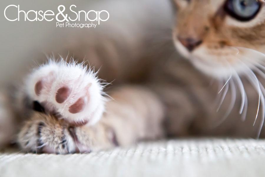 Details Project 52 | New Jersey Pet Photographer