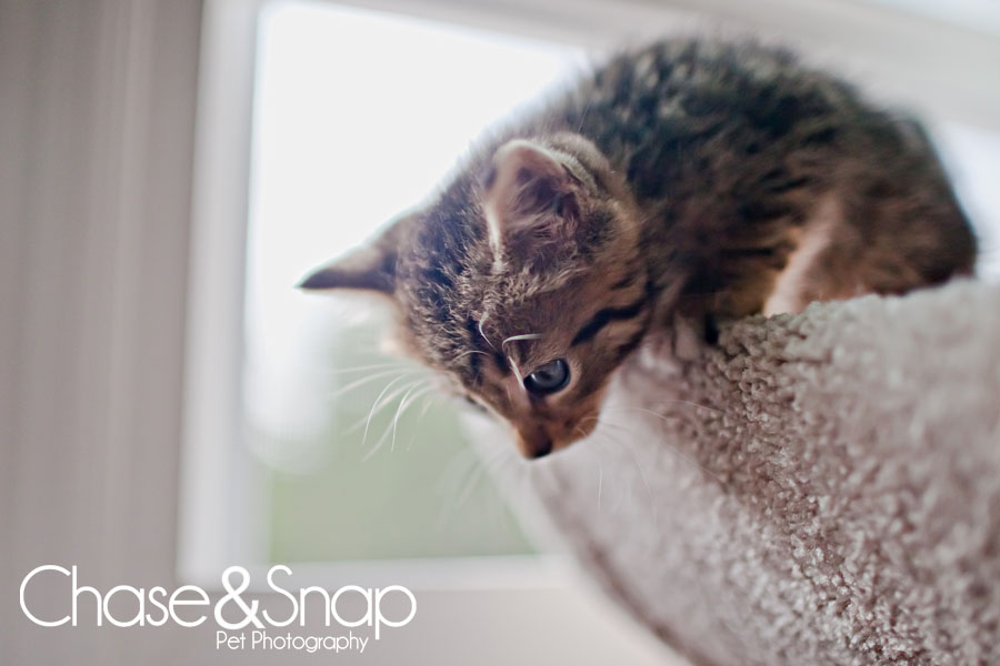 Gazpacho kitten | New Jersey Pet Photographer