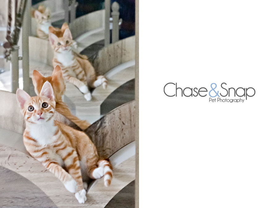 Toby cool cat | New Jersey Pet Photographer