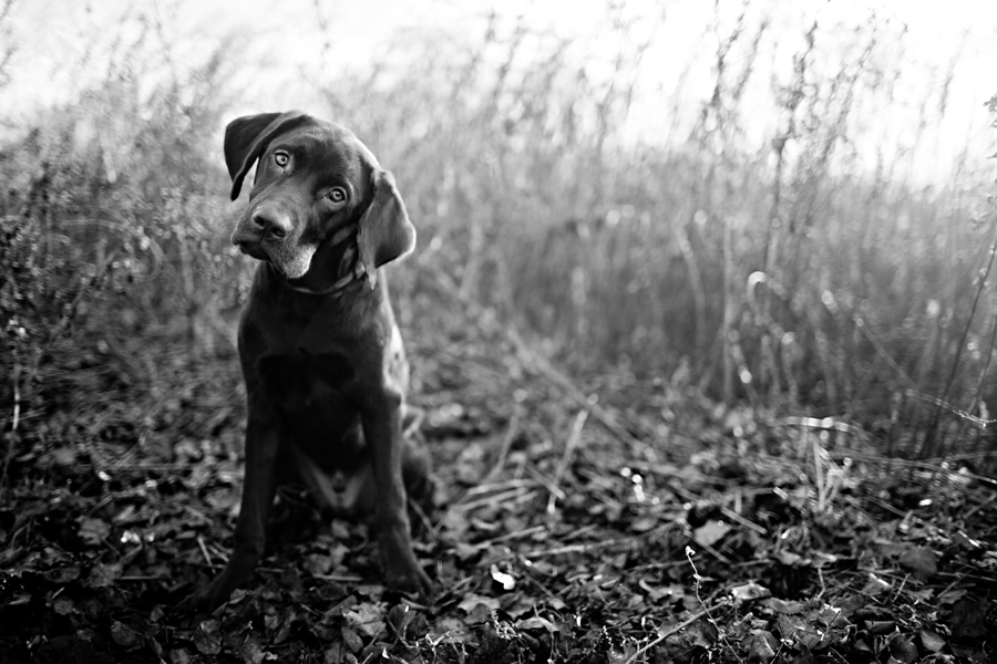 Vermont Pet Photographer