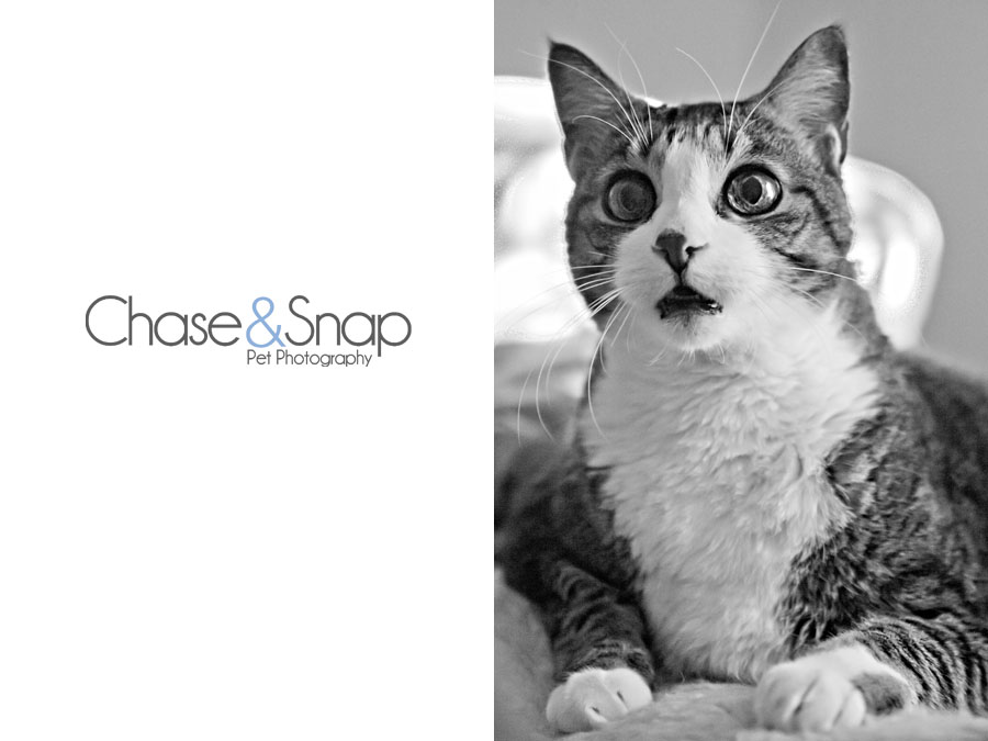 silly cat | New Jersey Pet Photographer