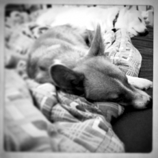 iPhone | Chilled Out | New Jersey Pet Photographer