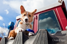 New Jersey Pet Photographer | Corgi, Red Tractor
