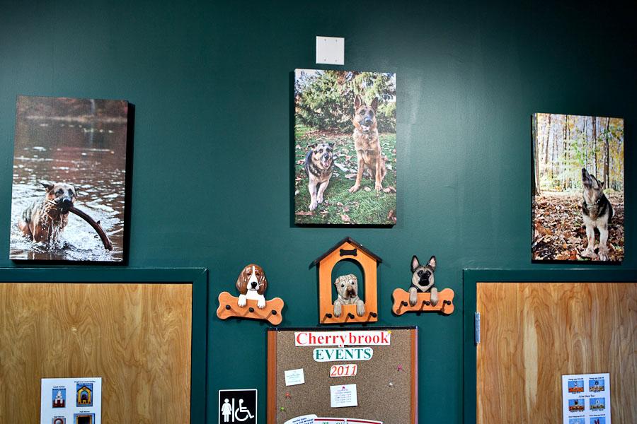 Cherrybrook Premium Pet Supply Store | Garwood, NJ | NJ Pet Photographer