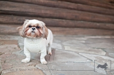 New Jersey Pet Photographer | MCSPCA Dog Walk | Shih Tzu
