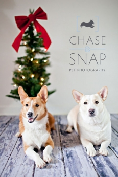 New Jersey Pet Photographer | Studio | Holiday