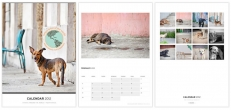 2012 Strays Around the World Calendar - Puerto Rico