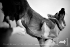 Professional New Jersey Pet Photographer | Project 52