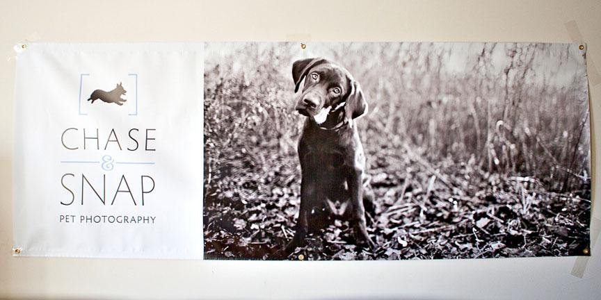New Jersey Pet Photography | Buildasign.com