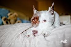 Schnickers | New Jersey Pet Photographer