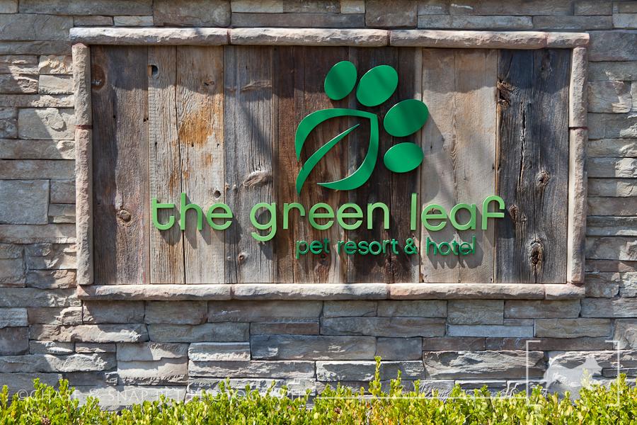 Green Leaf Pet Resort & Hotel | New Jersey Pet Photographer