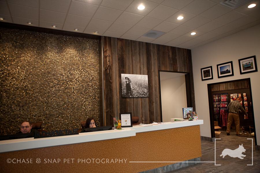 The Green Leaf Pet Resort & Hotel | New Jersey Pet Photographer