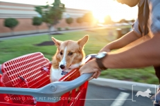 Shopping cart fun | Project 52 | New Jersey pet photographer