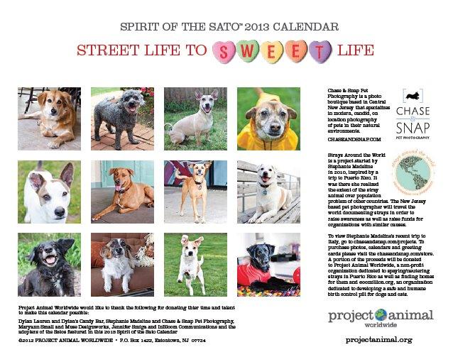 New Jersey Pet Photographer | Sato Calendar