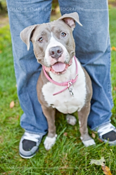 Naya | Pitbull | New Jersey Pet Photographer