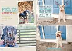 Holiday Cards | New Jersey Pet Photographer