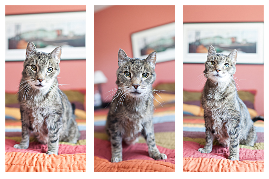 New Jersey Pet Photography | Cat | Tryptych