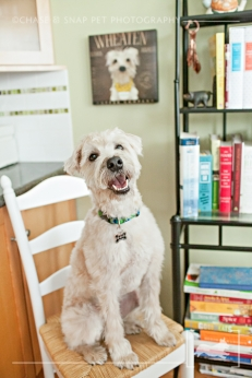 New Jersey Pet Photographer | Wheaten Terrier