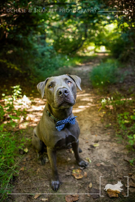 New Jersey Pet Photographer